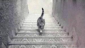 Dette billede har skabt en voldsom diskussion på Internettet: Går katten op elle