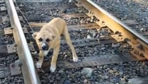 Chok: Manden fandt en ung hund, som var bundet fast til jernbanesporene!