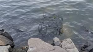 Pitbullen var lukket inde i et bur og efterladt ved havet til den sikre død. Hel