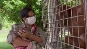 Orangutang-moren får sin bortførte unge tilbage. Dens reaktion gør, at alle får