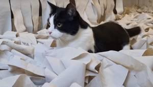 De besluttede sig for at fylde et helt værelse op med toiletpapir, sådan at katt
