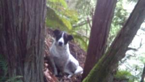 Hundens ejer døde, mens de var ude i skoven, så hunden besluttede ikke at gå nog