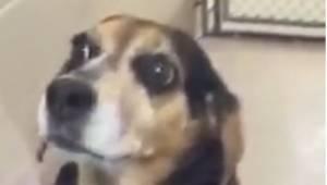 Kvinden bragte en hund med til dyreinternatet, hvor hun bad lægen aflive den. År