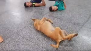 Børnene træner på gulvet under danseundervisningen, men så kommer der en hund, s