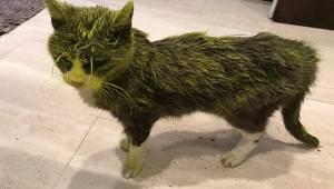 Den ulykkelige katteejer beskriver, hvordan en ukendt gerningsmand hældte maling