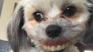 Den ældre herre tabte sin tandprotese; da han kiggede ned under bordet, så han,