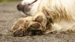 En helt igennem sund og rask hund dør, lige efter at den har været ude og gå en