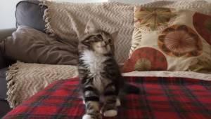 Når ejeren spiller denne sang, så gør katten noget utroligt!