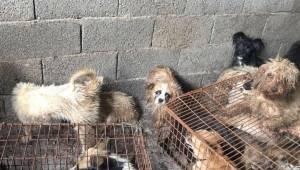 Hundene bliver tortureret og dræbt, for at ende som madretter på denne umenneske