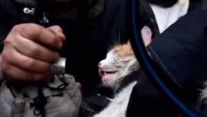 Da brandfolkene fandt denne kat i den brændende lejlighed, gav den ikke noget li
