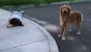 Redningsfolkene nærmer sig den sårede kvinde, og så gør hendes hund noget, som e