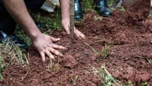 Mennesker i Etiopien har plantet over 350 millioner træer i løbet af blot en enk