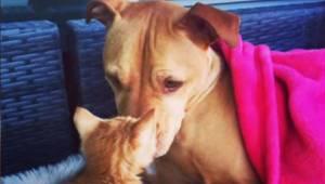 Denne pitbull blev medlem af familien for 6 år siden, nu har dens menneske taget