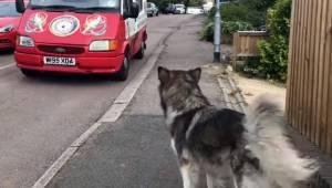 Denne hund venter hver dag på isbilen; se dens reaktion, da den endelig kommer!