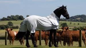 Denne fantastiske hest bemærker, at en flok køer ser opmærksomt på den, så heste