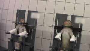 En chokerende optagelse viser, hvordan forsøgsdyr behandles i forbindelse med to