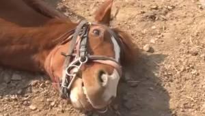 Hesten henrykkede internetbrugerne med hvor yndefuldt den klarede at slippe væk