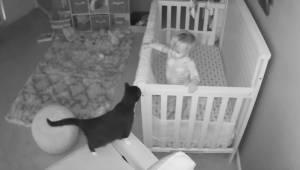 Denne charmerende aftensamtale mellem en lille dreng og hans kat vil kunne sætte