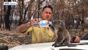 I pauserne mellem ildslukningen finder de australske brandfolk tid til at give d