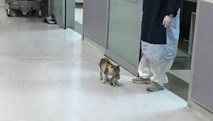 Den lille hunkat førte sin syge killing til hospitalet i håbet om, at lægerne ku