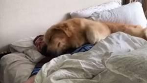 Den måde, denne hund vækker sit menneske på, gør, at man simpelt hen ikke kan un