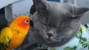 Et usædvanligt forhold mellem en kat og en papegøje. Hvis jeg ikke havde set den