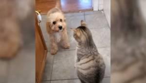 Den lille hvalp får ikke lov at komme ud i køkkenet, for katten vil ikke lade de